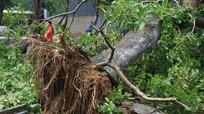 Cây xanh thành phố Vinh gãy đổ nhiều trong bão số 2 - những vấn đề đặt ra