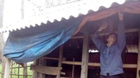 Cách chăm sóc gia súc, gia cầm trong mùa mưa bão