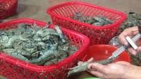 Tăng mức phạt đối với hành vi đưa tạp chất vào thủy sản