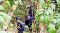 Băng rừng tìm đồng đội