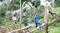 Ngân hàng xem xét giảm lãi suất cho người dân bị thiệt hại do bão số 2