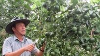 Người dân tộc Thổ ở Nghệ An trở thành 'Nông dân xuất sắc của Việt Nam'