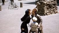 Những phim gây tiếng vang lấy bối cảnh Thế chiến thứ hai