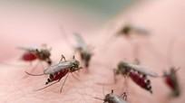 Nguy cơ chảy máu ồ ạt khi sốt xuất huyết tự uống hạ sốt
