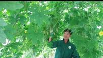 Anh Sơn: Nhân rộng 4 mô hình kinh tế hiệu quả