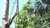 Hãi hùng với muôn kiểu mắc điện ở miền Tây Nghệ An