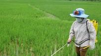 Hơn 200 ha lúa ở Quỳ Châu bị nhiễm rầy nâu, rầy lưng trắng