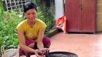 Nông dân lên rừng hái sim bán tiền triệu