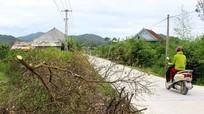 Nghệ An: Chanh thành củi sau bão