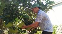 Anh Sơn: Nông dân thu gần trăm triệu đồng/năm nhờ cải tạo vườn tạp