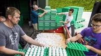 Khủng hoảng trứng 'bẩn' tại các nước châu Âu