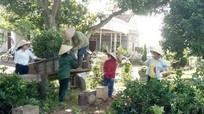 Thái Hòa: Hỗ trợ hơn 5.000 cây bưởi hồng Quang Tiến cho người dân