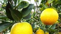 Nghệ An: 166 sản phẩm gửi Bộ Nông nghiệp chấm điểm, gắn sao