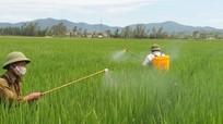 Nghệ An ra công điện khẩn diệt trừ sâu bệnh hại lúa