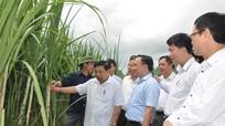 Anh Sơn cần quan tâm phát triển kinh tế, văn hóa và du lịch