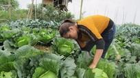 Quỳ Châu:  Tìm đầu ra cho rau vụ đông