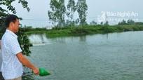 Mỗi năm Nghệ An có gần 10 ha nuôi cá rô phi VietGap