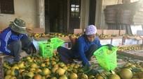 Yên Thành đa dạng phương án tăng giá trị nông sản