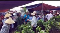 Bát nháo thị trường giống cây trồng ở Nghệ An