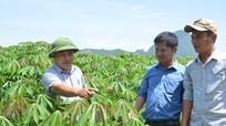 Công ty TNHH chế biến nông sản Hoa Sơn: Gắn kết với người dân vùng nguyên liệu