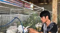 Chàng trai 9X làm giàu nhờ nuôi thỏ Newzealand