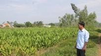 Qua mặt xã, trưởng thôn bán đất nông nghiệp