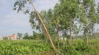 Vụ trưởng thôn tự ý bán đất: Sai phạm tràn lan