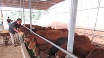 Qùy Châu đẩy mạnh phát triển gia súc có sừng