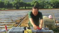 Con Cuông xây dựng 1,5 ha rau an toàn theo hướng VietGap