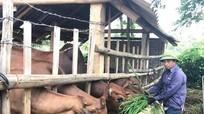3 bước cần thiết để bảo vệ vật nuôi mùa mưa bão