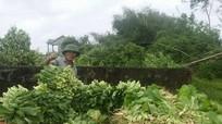 Bão số 10 đã gây thiệt hại cho huyện Nghi Lộc ước 8 tỷ đồng