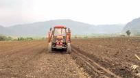 Nông dân Nghệ An tích tụ ruộng đất sản xuất lớn