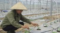 Con Cuông triển khai trồng 5.200 gốc dưa Mỹ vụ thứ 2