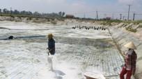 Nông dân Nghệ An lo lắng tôm nhiễm bệnh sau bão
