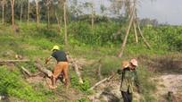 Rừng phòng hộ ven biển Nghệ An bị người dân 'vô tư' chặt phá