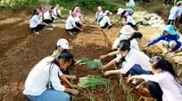 Học trò bán trú người Mông say mê trồng rau sạch