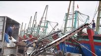Nghệ An: Cho vay phục vụ khai thác hải sản xa bờ tăng mạnh