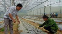 Xuất hiện nhiều mô hình khuyến nông hiệu quả ở Nghệ An