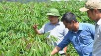 Sản phẩm nông nghiệp sạch ở Anh Sơn có chỗ đứng trên thị trường