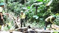 Nghệ An nghiêm trị những kẻ phá rừng