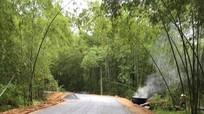 Thảm nhựa con đường xanh 45 năm tuổi đẹp nhất Con Cuông