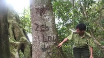 Làm rõ, xử lý nghiêm các đối tượng chặt phá rừng