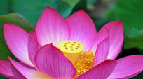 Ngắm vẻ đẹp đắc sắc của Top 5 quốc hoa trên thế giới
