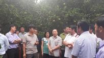 Điện Biên học tập kinh nghiệm xây dựng nông thôn mới tại Quỳ Hợp