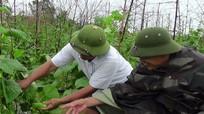Mưa to, cây trồng vụ đông ngập úng, nông dân thiệt hại nặng nề