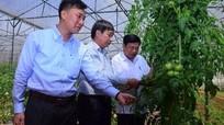 Chủ tịch UBND tỉnh khảo sát vùng ứng dụng nông nghiệp công nghệ cao tại Lâm Đồng