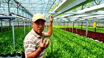 Gạt bỏ lòng tham để có nông sản sạch