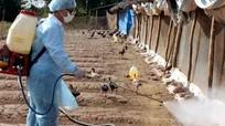 Nghệ An cùng 3 tỉnh được cấp vắc-xin phòng chống dịch gia súc, gia cầm