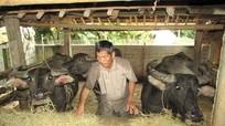 Người dân miền núi 'trồng' rơm cho trâu bò trong những ngày mưa gió