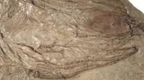 Phát hiện hóa thạch cá có niên đại 240 triệu năm